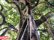 """山茶绿林的""""奇木""""(组图)"""