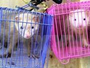 越南暂停向老挝签发CITES许可