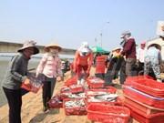 越南中部环境问题:请勿歪曲事实!