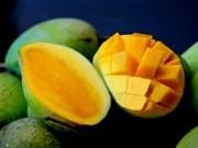山萝省农民维护和发展安州芒果品牌