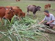 越南着力使贫困人口比例年均下降1-1.5%