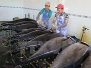 越南金枪鱼出口复苏