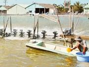 九龙江平原地区在气候变化条件下发展养虾业