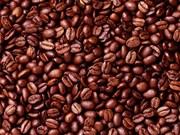 越南对阿尔及利亚的咖啡出口量骤增