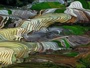 越南:木岗寨梯田美景