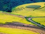 水稻丰收季节的意迪山区色彩