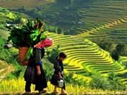 有关越南的摄像照片在欧洲网站闪光