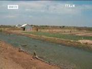 联合国粮农组织:气候变化对越南造成严重影响