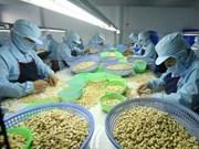 今年前10月越南腰果出口量和金额均上涨