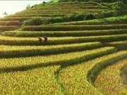越南跻身2017年全球十大最便宜的旅游目的地名单