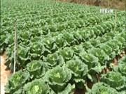 越南力争2017年蔬果出口额突破30亿美元大关