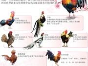 世界部分国家文化中公鸡的形象
