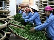越南茶叶品牌塑造   在摸索中前行