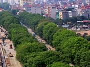 河内市区更换路旁树种需三思而后行