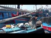 今年前5月金枪鱼出口呈强劲增长势头