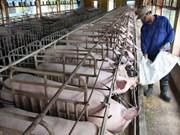 越南畜牧业努力寻找出路