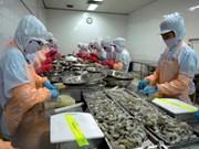 金瓯省扩大虾类出口市场