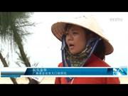暴雨多发季节来临  广南省需尽早推出海滩保护措施