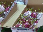 越南首批新鲜火龙果在澳大利亚出售
