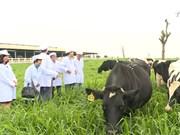 越南奶制品受到国内消费者的青睐