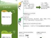 图表新闻:2018年1月1日起 越南只生产经营E5 Ron92号汽油和Ron95号汽油