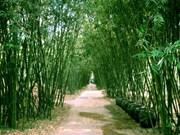 同塔省致力于保护与弘扬越南竹子的价值