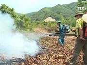 岘港市加强旱季森林火灾工作
