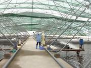 越南虾类和鲍鱼将被实施《海产品进口监督程序》