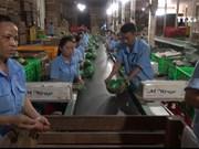 越南新鲜水果出口新西兰市场的机会越来越多