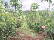 嘉莱省促进农业可持续发展  提高经济效益