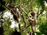 随意投食危害山茶半岛猴子健康和游客安全