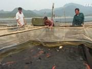 在水库中进行网箱养鱼为宣光省解决就业问题