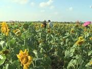 农业与旅游相结合模式为农民带来高效