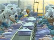 2016年越南查鱼出口额有望增长5%