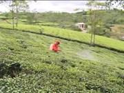出口农产品品牌塑造 越南企业需要做到的事