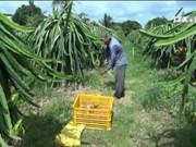 今年前10个月,越南向全球高端市场出口1万吨新鲜水果