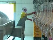 越南畜牧业应致力于扩大销售市场