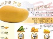越南首批芒果出口到美国市场(图表)