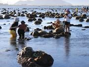 组图:宁顺省绚丽的露天珊瑚礁