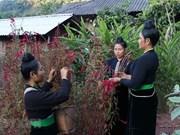 组图:奠边省贡族独特的鸡冠花节