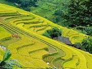 组图:河江省黄树肥的美丽梯田