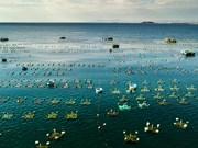 富安省龙虾养殖基地(组图)
