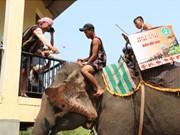 得乐省颇具文化特色的祈求大象健康仪式(组图)