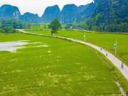 越南旅游:宁平省三谷碧洞胜地碧绿稻田一望无际(组图)