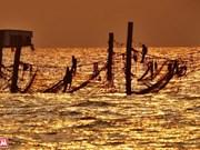 头顿海域的桩网捕捞(组图)