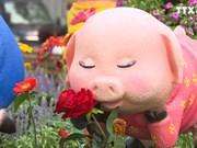 胡志明市己亥春节花卉节    3000多种奇花异草大合集