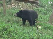宁平省黑熊保护基地正式落成
