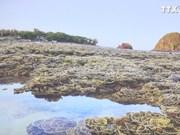 富安省需加强对燕岛珊瑚礁的保护措施