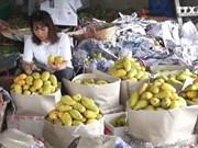 同塔省首批芒果出口到美国