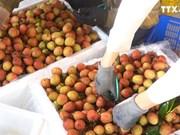 北江省9万吨荔枝满足出口中国的标准